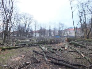 """Wycięli 300 drzew w Ogrodzie Krasińskich. """"Skandal, dewastacja"""""""