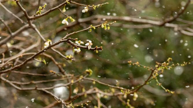 Pogoda na 5 dni: zimny, śnieżny i wietrzny przełom pór roku. Widać jednak poprawę pogody