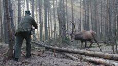 Leśniczy uwalniający jelenia z kłusowniczych wnyk