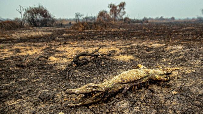 Pożary napędzają suszę, a susza napędza pożary. Zabójcze błędne koło w Amazonii